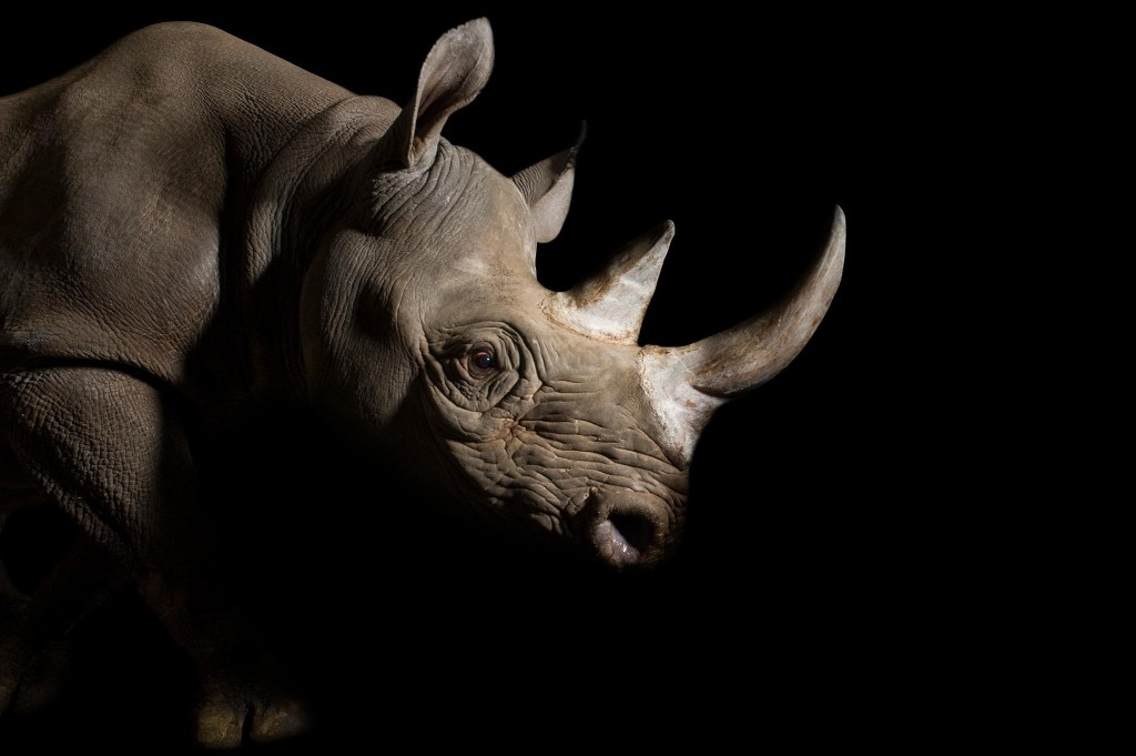 The world's biggest conference on wildlife trade is happening. Get the details.