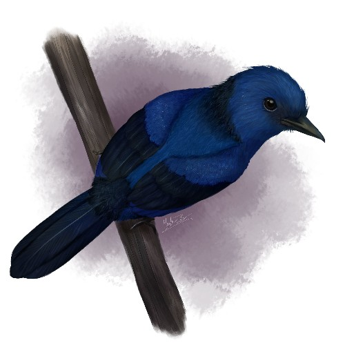 First blue feathers found on a fossilized bird