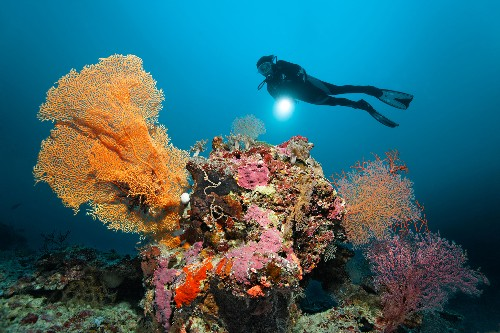 Australia to Dump Dredged Sand in Great Barrier Reef Waters, Adding to Site's Mounting Woes