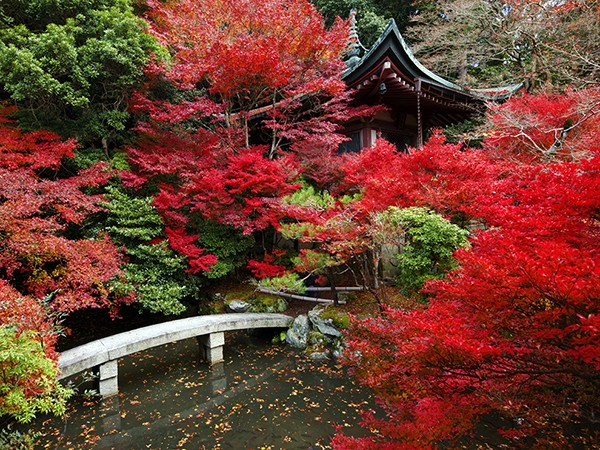 Top 10 Places to See Autumn Leaves