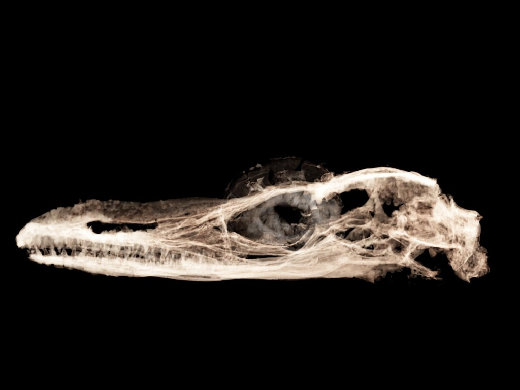 The smallest known dinosaur is actually a peculiar ancient lizard