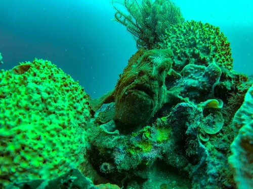 FROGFISH Photo by Austin Rex Lobaton — National Geographic Your Shot