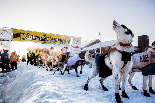 Survival Is the Ultimate Goal in World's Toughest Sled Dog Race