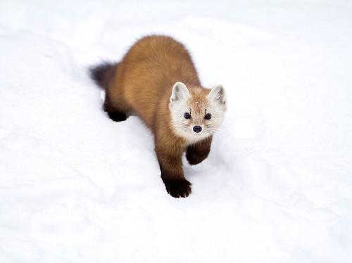 Pictures: Animals of Canada