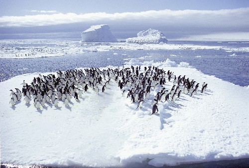 Penguins That Weathered Past Climate Change Suffer This Time