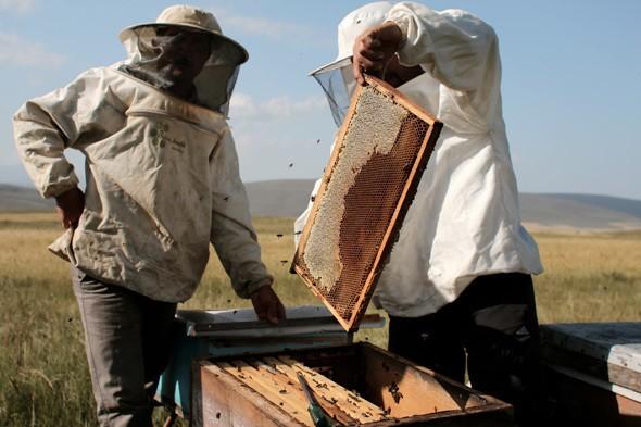 Darwinian Tourism: Honey Hunting in the Caucasus