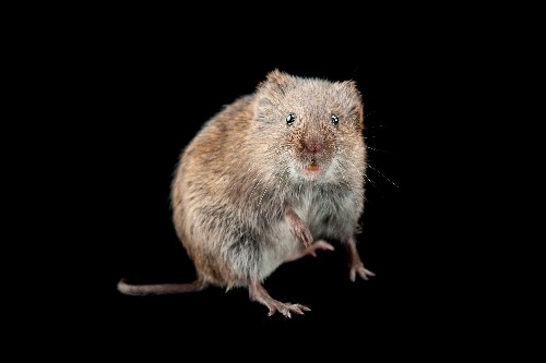 Drinking Alone Leads to Divorce—In Rodents