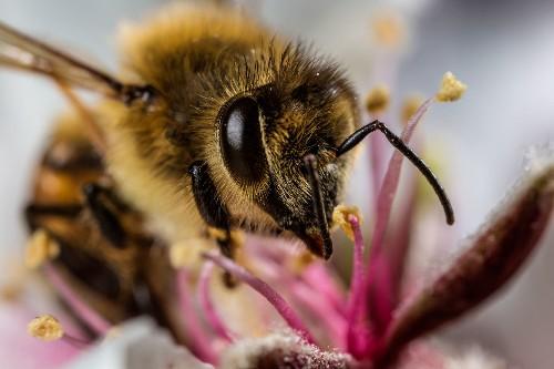 10 sweet photos of honeybees
