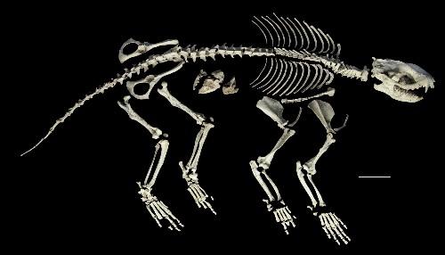 Paleo Profile: Alcide d'Orbigny's Dawn Beast