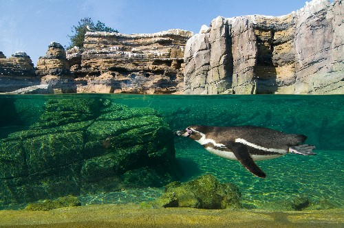 Pictures: Seven Energy-Smart Zoos and Aquariums