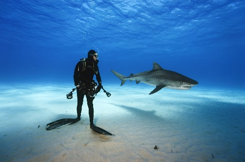 He Went Face-to-Face With Tiger Sharks
