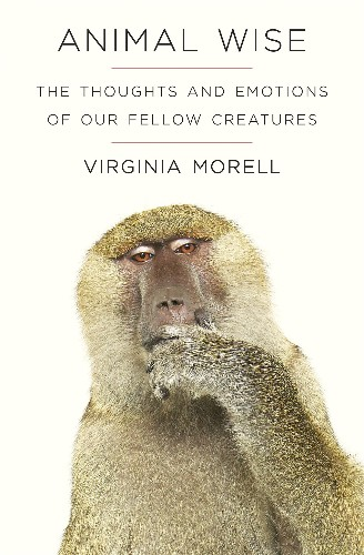 What Are Animals Really Thinking? Author Explores Hidden World