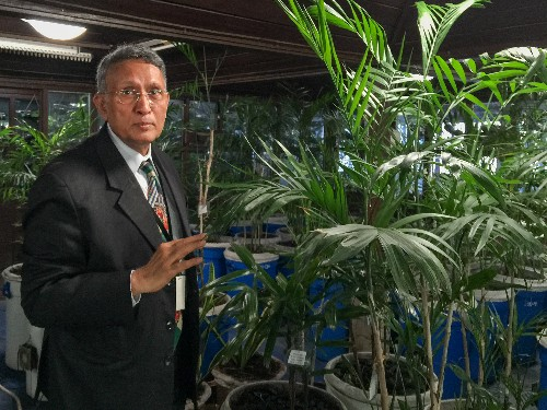 Can Houseplants Really Clean the World's Smoggiest City?