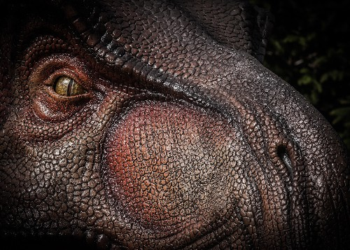 T. rex had an amazing sense of smell, gene study suggests