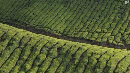Landscapes of Munnar Photo by Vijay Ramanathan — National Geographic Your Shot