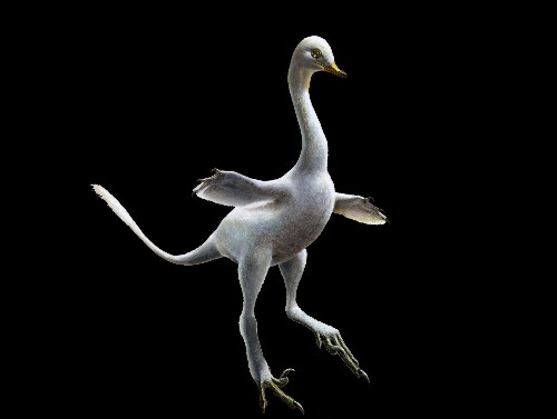 Duck-Like Dinosaur Is Among Oddest Fossils Yet Found