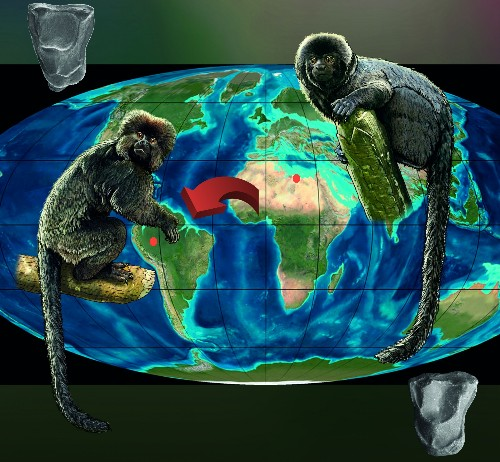 When Monkeys Surfed to South America