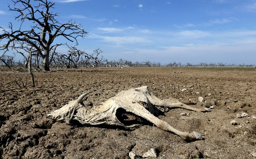 Wildlife Dying En Masse as South American River Runs Dry