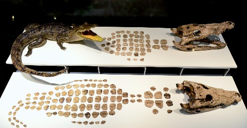 More Than 400 Animals Offered to Aztec Gods