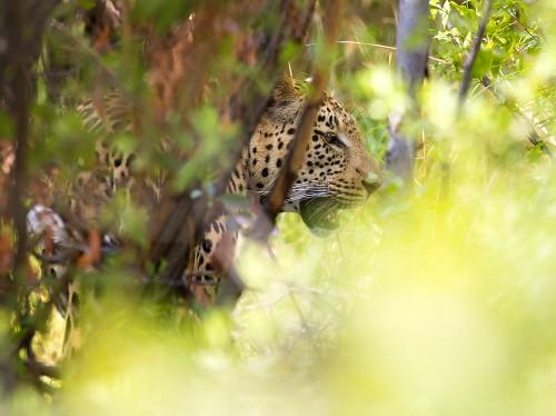 Safari Photography: 10 Tips for Capturing Wildlife