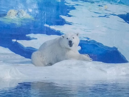 Nearly Two Years Later, 'World's Saddest Polar Bear' No Longer Sad?