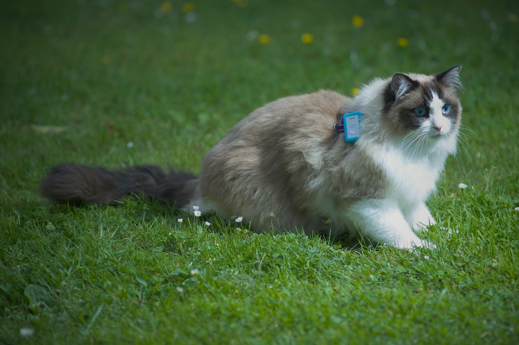 'Cat Tracker' study reveals the secret wanderings of 900 house cats