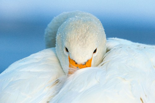 Our Favorite Pictures of Birds Around the Globe