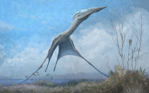 Huge Antarctic pterosaur found in fire-struck museum