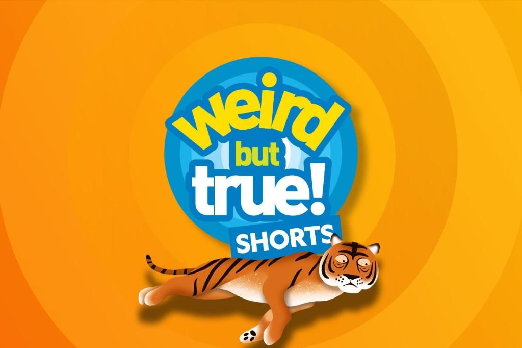 Weird But True! Shorts