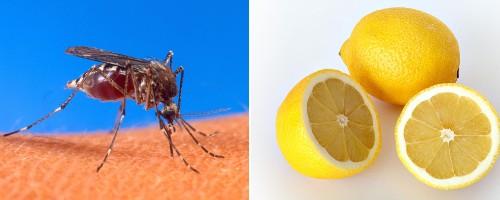 Lemon-Scented Malaria