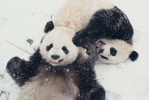 15 Pictures of Cute, Cuddly Animals Playing in the Snow