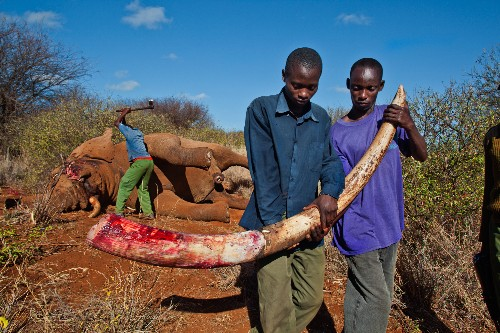Fighting Wildlife Crime: New U.S. Strategy Broadens Scope