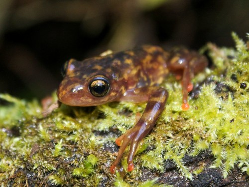 Deadly Frog Fungus Pops Up in Madagascar, An Amphibian Wonderland