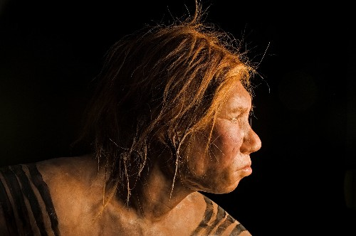 Ancient Girl's Parents Were Two Different Human Species
