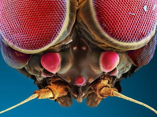 Seeing Eye to Microscopic Eye