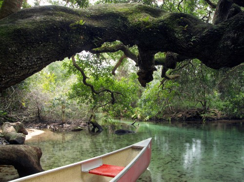 Florida by Water: Paddle Into the Wild