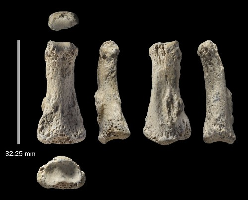 88,000-Year-Old Finger Bone Pushes Back Human Migration Dates