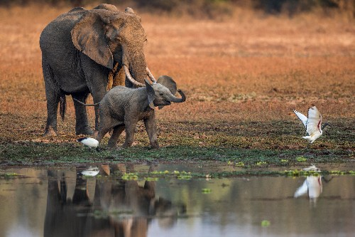 Why walking safaris are the best way to see wildlife