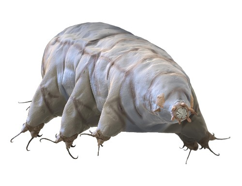 Insights on mighty 'water bears,' hardy seeds, and a new sensory organ