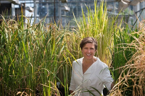 Can This Scientist Unite Genetic Engineers and Organic Farmers?