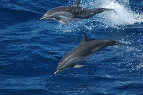 DNA Discovery Reveals Surprising Dolphin Origins