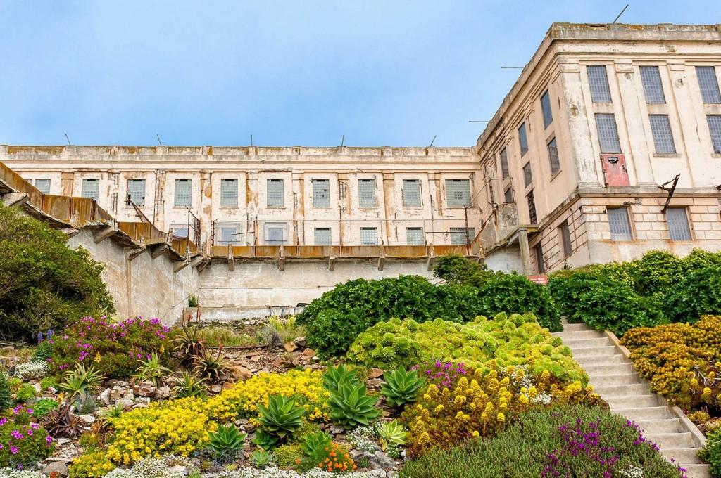 Alcatraz's gardens are flourishing, against all odds