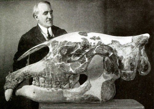 How Paleontologists Uncovered the World's Biggest Rhino