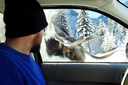 Up Close: From a Car-Licking Moose to a Blood-Dripping Vulture