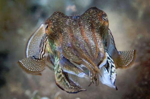 Cuttlefish Remember What, Where and When They Ate