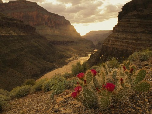 Oldest known footprints in the Grand Canyon found