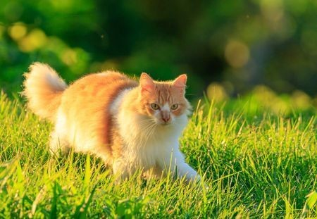 Running in the Dew Photo by Denis Duflo — National Geographic Your Shot