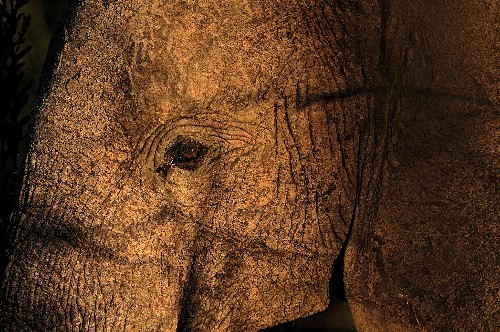 Q&A: Report Alleges Governments' Complicity in Tanzanian Elephant Poaching