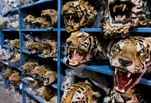 London Summit Intensifies Battle Against Wildlife Crime