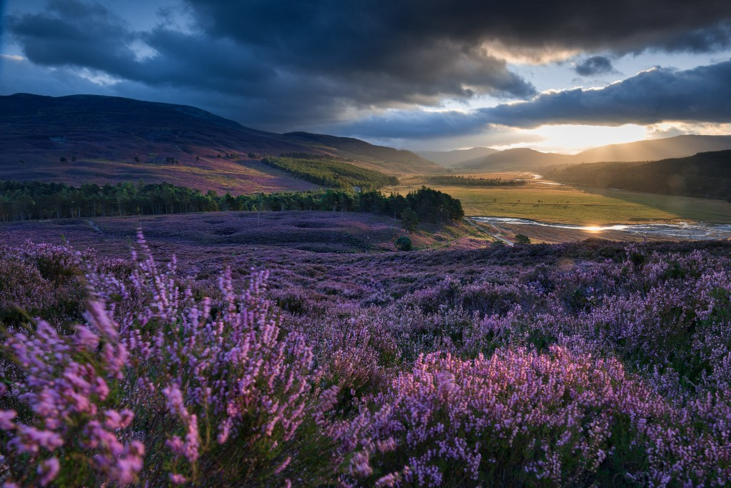 What Will Become of Scotland's Moors?